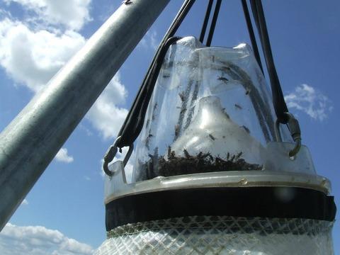 Horesefly trap Loer spare reservoir