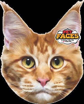 Pet Faces Maine Coon Cat