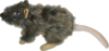 Wild Life Dog Rat
